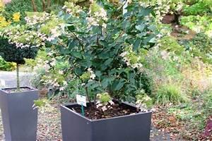 Winterharte Pflanzen Liste : winterharte laub und nadelgeh lze zur bepflanzung von k beln ~ Michelbontemps.com Haus und Dekorationen