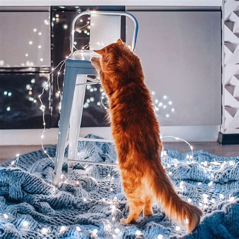 cutlet  cat poses   personal human photographer