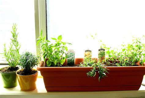 window sill garden windowsill herb gardens bunch