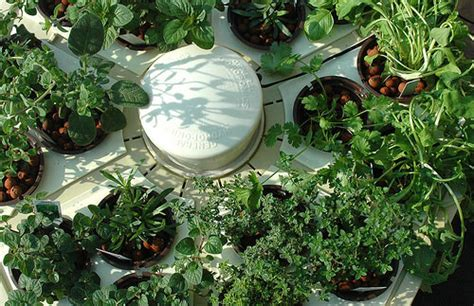 hydroponic herb garden hydroponic herb garden systems and cool kits