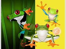 Frog free vector download 255 Free vector for commercial