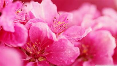Pink Background Backgrounds Wallpapers Definition