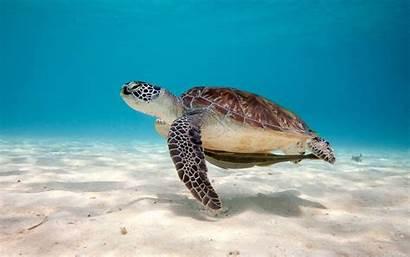 Turtle Sea Desktop Wallpapers Reptile Pc Widescreen