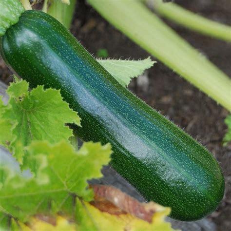 poids si鑒e auto légumes locaux et bio en drive fermier