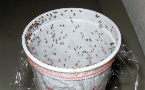 DIY: 5 All Natural Insect Traps and Deterrents for those