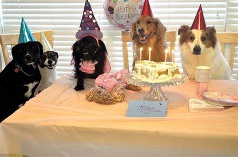 ideas  dog years  pinterest age