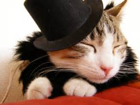 cat hats cat in a hat mooandflo the random wittering of flo
