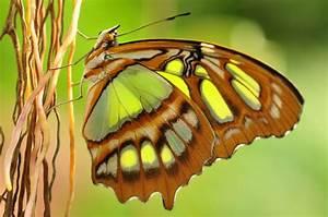 Schmetterling Am Kinderbett : schmetterling am ast foto bild archiv kritik am bild ~ Lizthompson.info Haus und Dekorationen