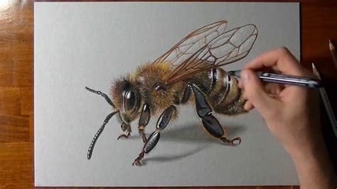 draw   bee youtube