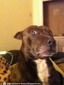 Dogs pictures: Shocked dog