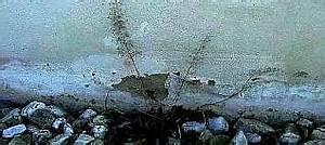 Nasse Wände Trockenlegen : aufsteigende feuchte nasse w nde feuchte mauern trockenlegen keller sanierung 3 ~ Frokenaadalensverden.com Haus und Dekorationen