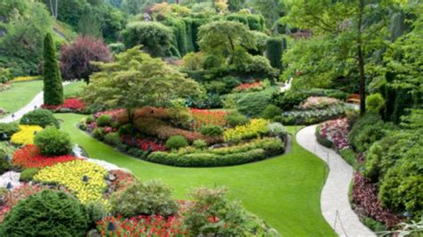plants landscaping evergreen plants for landscaping landscaping plants choosing tips youtube
