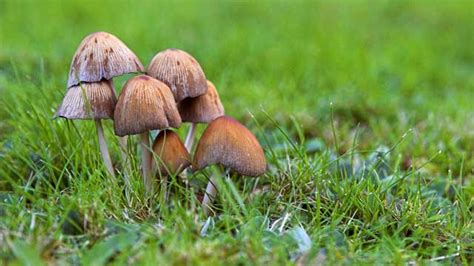 Pilze Im Garten Braun by Pilze Im Rasen Loswerden Ursache Und Abhilfe