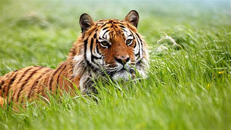 animals wallpapers  full hd