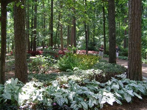 woodland gardening garvan woodland gardens archives parks wholesale plants