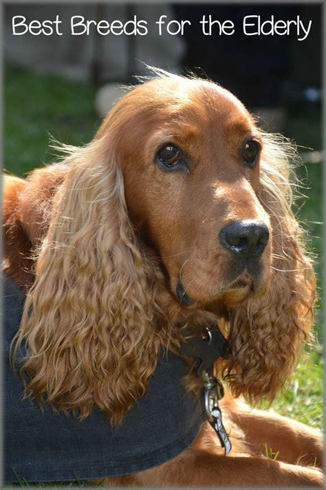 dog breeds   elderly dogvills
