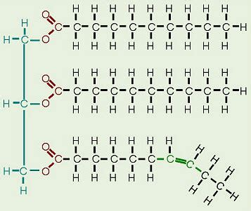 organic chemistry saturated  unsaturated fats