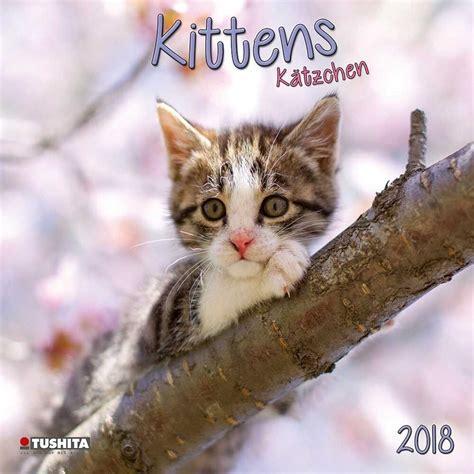kittens calendars ukposterseuroposters