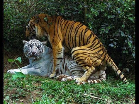 Animals Mating Pictures Wallpaper - new animal mating animal mating