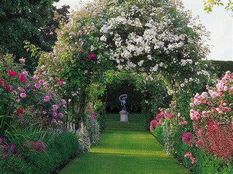 how to plant roses how to plant roses planting roses hgtv