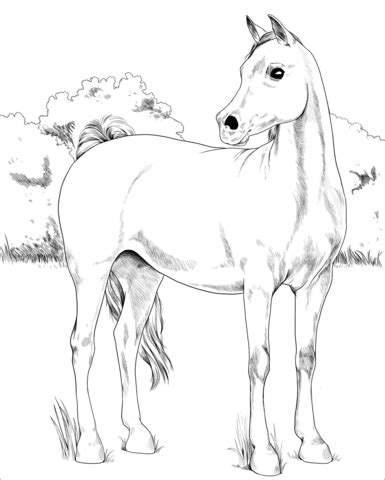 arabian horse coloring page  printable coloring pages