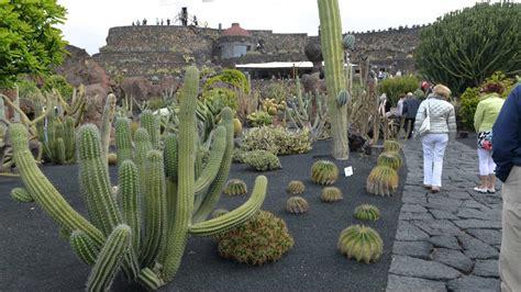jardin de cactus por manrique youtube