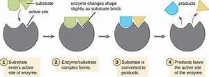 Energy  Matter  And Enzymes