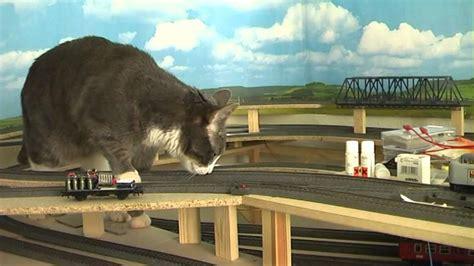 cat  model train youtube
