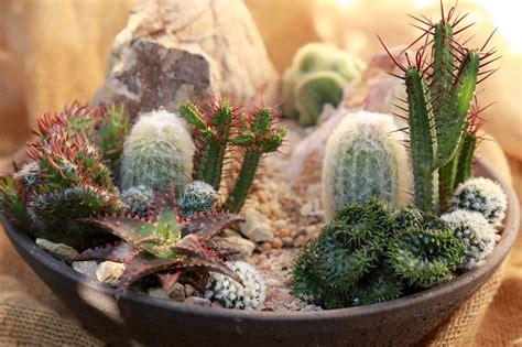 cactus attention: ประวัติความเป็นมาของแคคตัส