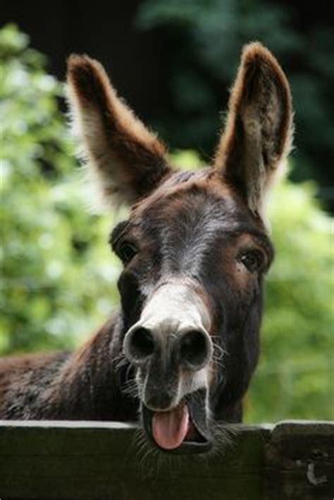 donkeys  south  south wales  pinterest