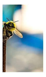 PWB Peeps: In praise of bees.