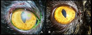 A  Photographic Image Of A Cat U2019s Eye Submitted To
