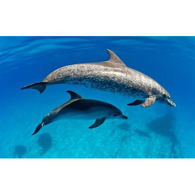 10 BEST PLACES TO DIVE WITH DOLPHINS - Magazine