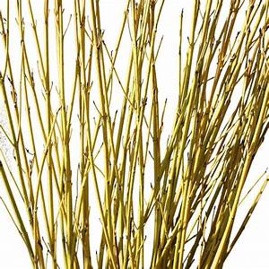 Decorative Branches Yellow Dogwood Branches