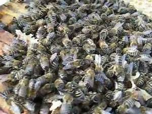 Was Machen Wespen Im Winter : winterbienen was machen die bienen im winter bienenfreude ~ Lizthompson.info Haus und Dekorationen