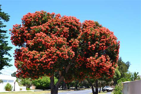 flower trees ornamental trees nowathome