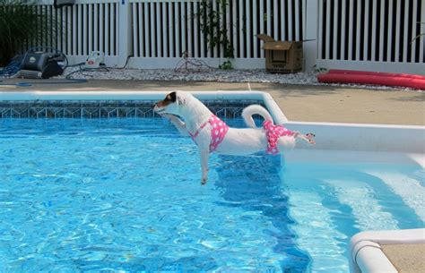 Dog Days Of Summer Part Ii  Pool Safety Really