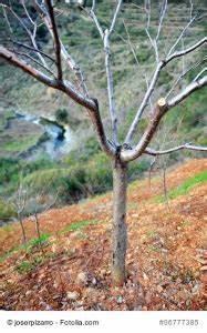 Schädlinge Am Kirschbaum : kirschbaum schneiden tipps und infos zum schnitt ~ Lizthompson.info Haus und Dekorationen