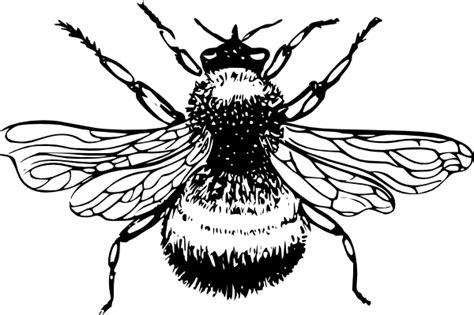 bumblebee clip art  clkercom vector clip art