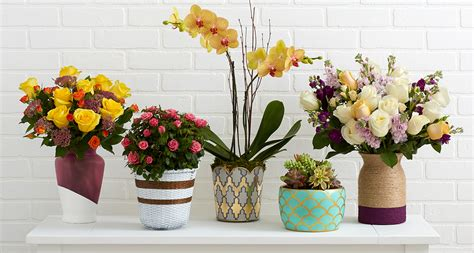 pictures of flowers in pots 5 ways to make flower pots pop proflowers blog