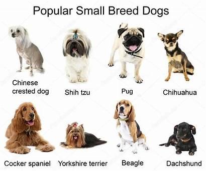 Dogs Different Breeds Perros Razas Honden Verschillende