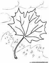 Leaf Coloring Oak Sheet Tree Air Colormountain Maple Swept Pages Autumn Cool sketch template