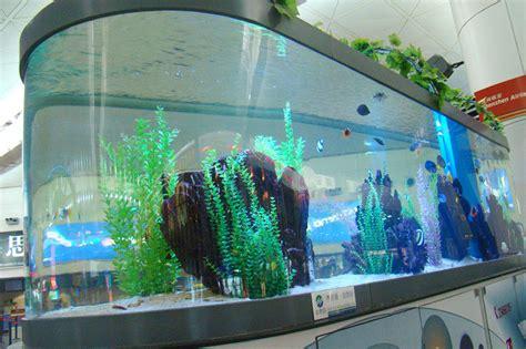 vente de poisson d aquarium 28 images animaux de compagnie les poissons d aquarium achat