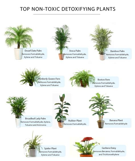 low light indoor plants safe for cats non toxic plants cats cute cats