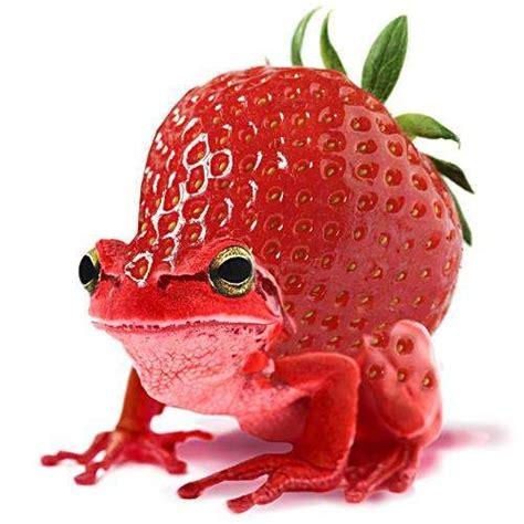 images  hybrid animals  pinterest salamanders
