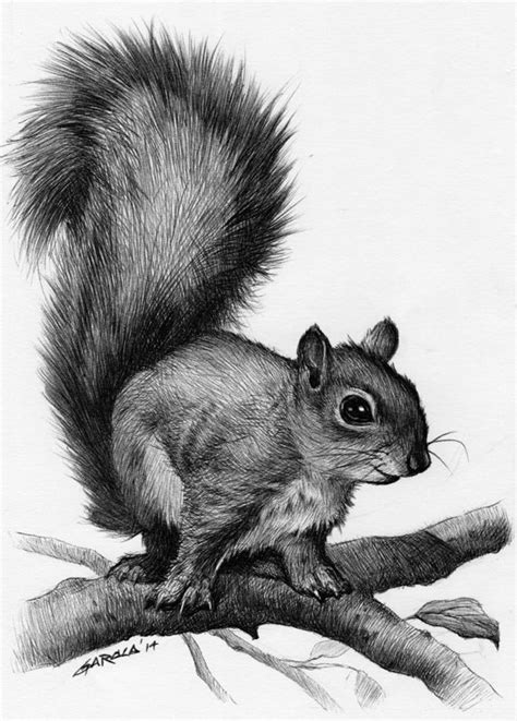 1000+ ideas about Squirrel Tattoo on Pinterest | Acorn