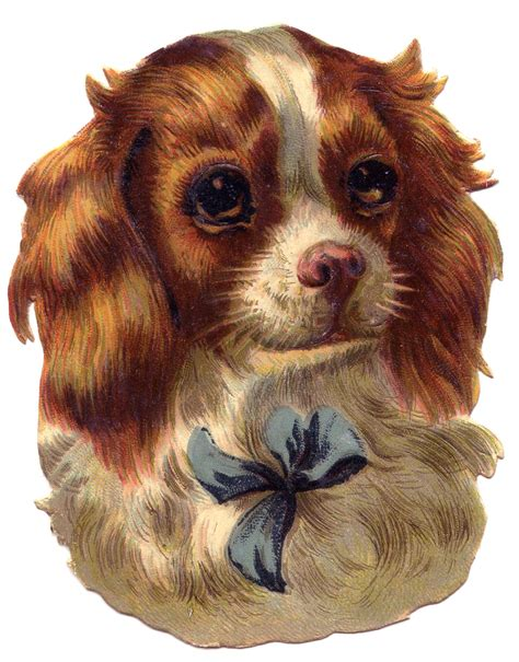 vintage image cute dog spaniel  graphics fairy