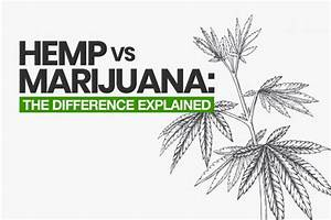 Hemp Vs Marijuana  The Difference Explained  2020 Update