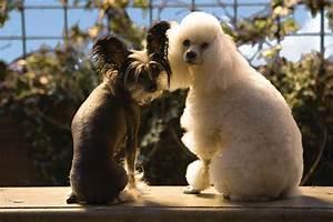 Hotel Pour Chien : palace pour chiens ~ Nature-et-papiers.com Idées de Décoration