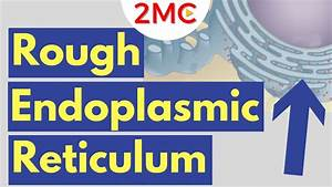 Rough Endoplasmic Reticulum Structure And Function